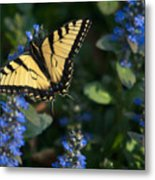 Ajuga With Tiger Butterfly Metal Print