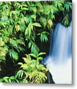 Akaka Falls State Park Metal Print