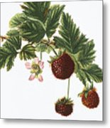 Akala Berries Metal Print