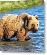 Alaska Bear Metal Print