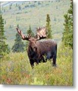 Alaska Monarch #3 Metal Print