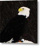 Alaskan Bald Eagle Metal Print
