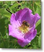 Alberta Wild Rose And Bee Metal Print