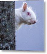 Albino Squirrel Metal Print