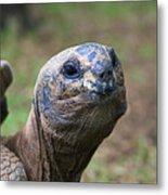 Aldabra Giant Tortoise's Portrait Metal Print