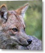 Alert Fox  Metal Print