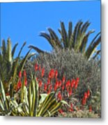 Algarve Plants Metal Print