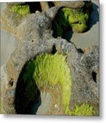 Alge On Beach Rock Formation Metal Print