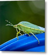 Alice The Stink Bug 2 Metal Print