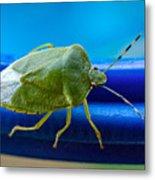 Alice The Stink Bug 3 Metal Print
