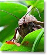 Alien Moth Metal Print