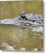 Alligator Stealth Metal Print