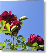 All About Roses And Blue Skies V Metal Print