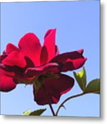 All About Roses And Blue Skies Viii Metal Print