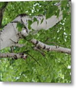 All About Trees Metal Print