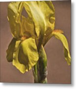 All About Yellow Metal Print