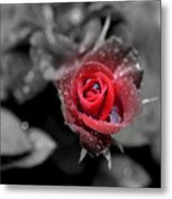 All Is Forgiven Metal Print