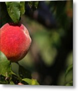 All Natural Peach Metal Print