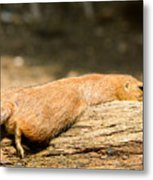 All Stretched Out Metal Print
