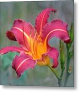 All Summer Lily Metal Print