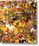 All The Leaves Are Red And Orange Fall Foliage With Sunshine Metal Print