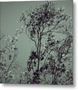 All With Time... Metal Print