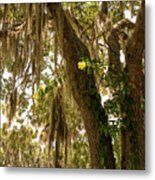 Allamanda And Oak Tree Metal Print