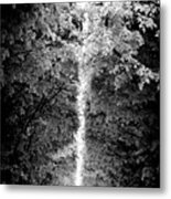 Allee_des_arbres Metal Print