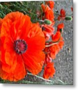 Alley Orange Red Poppies  Metal Print