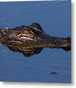 Alligator 17 Metal Print