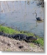 Alligator And Heron Metal Print