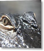 Alligator Eye Metal Print
