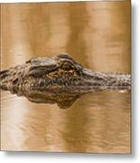 Alligator Head Metal Print