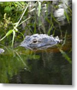 Alligator Hunting Metal Print