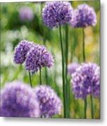 Allium 5 Metal Print