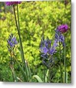 Allium And Camassia Metal Print