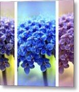 Allium Triptych Metal Print