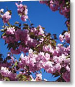 Almond Flowers Metal Print