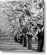 Springtime In The Almond Fields Metal Print