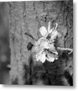 Almond Orchard 2 Metal Print