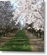 Almond Shadows Metal Print