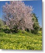 Almond Tree In Meadow Metal Print