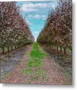 Almond Trees Of Button Willow Metal Print