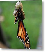 Almost A Butterfly Metal Print