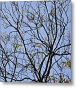 Almost Bare With Bird I Metal Print