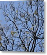 Almost Bare With Birds II Metal Print