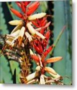 Aloe Bloom Desert Garden Metal Print