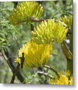 Aloe Blossoms with a Hummingbird Metal Print
