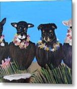 Aloha Teacup Chihuahuas Metal Print