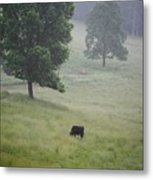 Alone In The Meadow Metal Print